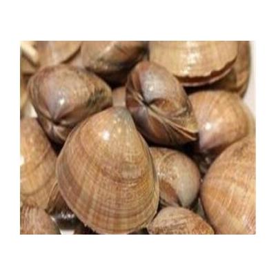 河蚌提取物 河蚌肉粉 1公斤起订  厂家供应