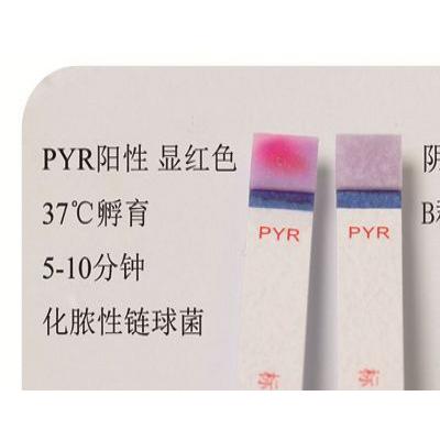吡咯烷酮试验试剂(PYR)